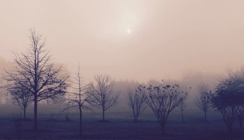 2nd place:Crystal Berry, Morning Mist, photography